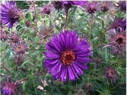 lovely decoration purple garden plants purple garden flowers with