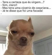 Memes De Chihuahua - memes de m3rda memes de m34da instagram インスタグラム の画像