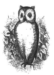 owl sketch public domain vectors