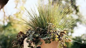 10 favorite ornamental grasses sunset