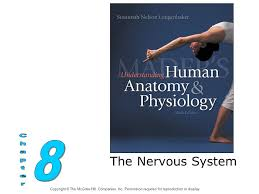 Anatomy And Physiology Nervous System Study Guide The Nervous System 8 Chapter Ppt Download