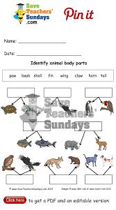 Animal Body Parts Lesson Plan For Kindergarten