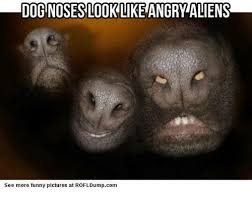 Funny Alien Meme - dognoseslook like angry aliens see more funny pictures at