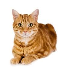 will my cat benefit from a raw food diet raw food guide