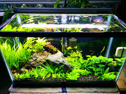 Aquarium Decoration Ideas Freshwater 10 Gallon Planted Over A Year With This Setup Aquariums