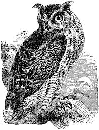 great horned owl clipart clipartxtras