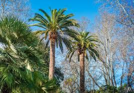 palm trees background freeartbackgrounds com