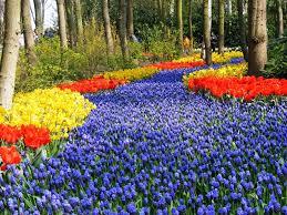 flowers garden city the flowers city holambra brasil cidade das flores holambra