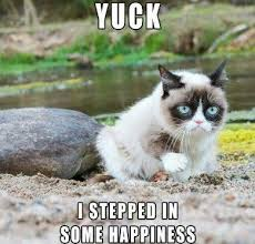 Grumy Cat Memes - 20 of the funniest grumpy cat memes funny pictures pinterest