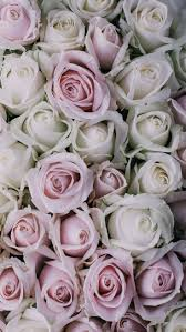 Pink Roses Wallpaper by 57 Best Wallpapers Images On Pinterest Iphone Backgrounds