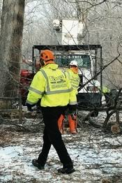 affordable tree service crossville tn 1st choice tree service 1st choice tree service llc lima ohio