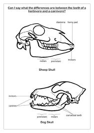 teeth worksheet by sueemc teaching resources tes