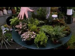 how to group plants together in a terrarium terrariums u0026 more