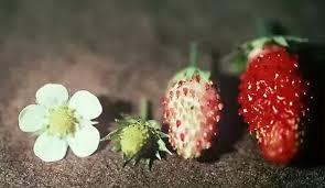 flower fruit do all trees flowers quora