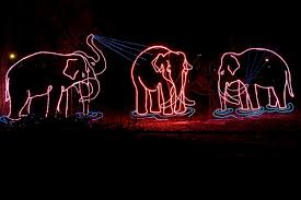 Zoo Lights Ohio by Welcome To Denver Zoo