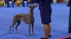 best in show tales and tails
