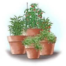 Container Gardening Peas - container gardening bonnie plants