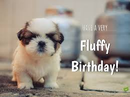Happy Birthday Pug Meme - top cute puppy happy birthday pictures