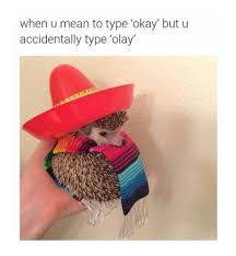 Type Memes - type olay funny pictures quotes memes funny images funny jokes