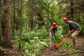 non native invasive plants it u0027s time to stop using non native plants in alaska gardens