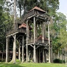 Tree House Backyard by Best 25 Tree Houses Ideas On Pinterest Tree House Designs