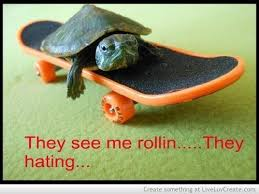 Funny Turtle Memes - 15 hilarious turtle memes i can has cheezburger