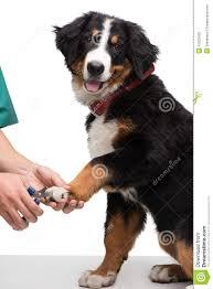 cutting dog nails blackfashionexpo us