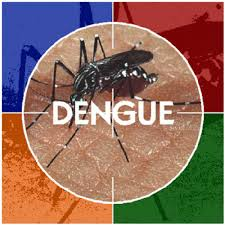 Massachusetts travel warnings images Dengue fever reported in hawaii coyote report from massachusetts gif