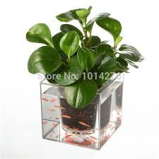self watering plants creative clear tube plant pot flower pot decorative self