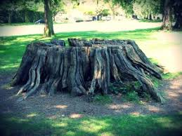 tree stump removal cost price guide