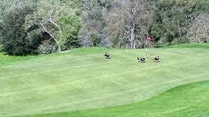 saddle creek golf club in copperopolis california usa golf advisor