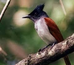 birds in sri lanka hotel tree of