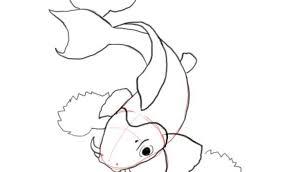 draw koi fish coloring 17 gallery coloring ideas koi
