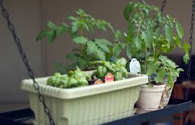 urban gardening tips and products for the space starved curbed