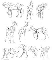 Dog Anatomy Book 104 Best Dibujos Sketch Animal Images On Pinterest Animal