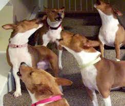 bad dog u0027 on animal planet review the new york times