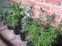 california native plant ground cover plants fall time to plant perennials gardenerd