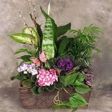 Plants Blooming Plants Blooming Plants Flowering Planters Kremp Com