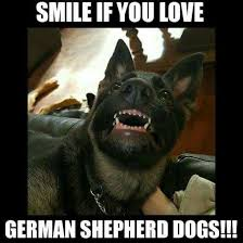 Crazy Dog Lady Meme - pin by terry smith on dogs beautiful german shepards pinterest