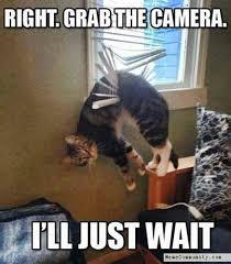 Camera Meme - right grab the camera first memecommunity com