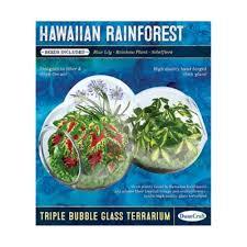buy glass terrarium from bed bath u0026 beyond