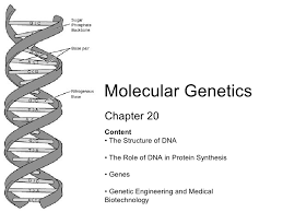 chapter 20 molecular genetics lesson 1 structure of dna