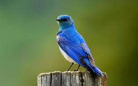 How To Attract Indigo Buntings To Your Backyard Entice Wildlife To Your Backyard Install It Direct