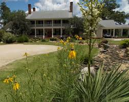 native florida plants for home landscapes native nurseries native nurseries