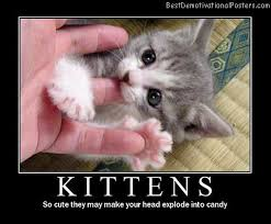 Cute Kittens Meme - cute kittens motivational poster