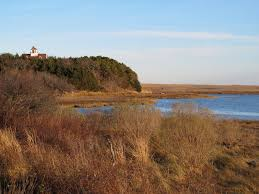exploring cape cod nauset marsh lifeabsorbed