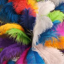 Ostrich Feather Centerpieces Wholesale by How To Care For Ostrich Feathers