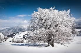 winter day andreas wonisch flickr