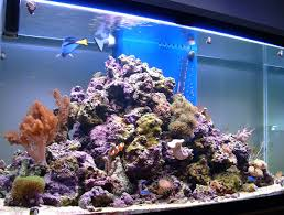 Live Rock Aquascaping Ideas Like The Pyramid Idea For Organizing Live Rock Saltwater