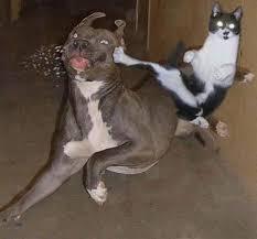 حبايبي القطط Images?q=tbn:ANd9GcTFjIV8N82S1vqMudZbah3QAuoObguSiuJDXXZbfcMFsDfbYl_K